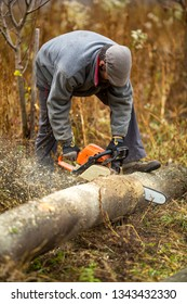 Young bearded man cutting tree wirh a big chainsaw in the forest.