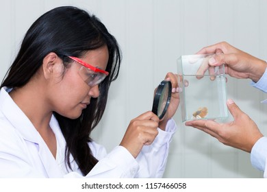 Young beautiful african american professor holding magnifying glass in white suite  and glasses,Doctor looking fighting fish in tank.Copy space.