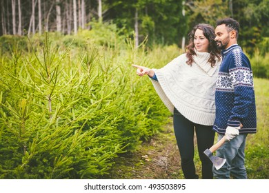 Young Beautiful Couple Choosing the Right Fir Tree for Christmas at the Farm of the Fir Trees