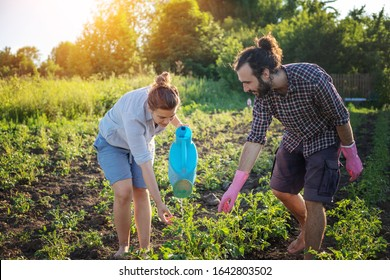 Young beautiful couple grows plants in their garden, takes care of plantings, spring concept in the sun