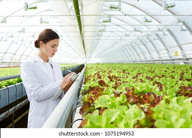 Young beautiful female agro engineer making notes in pad while standing in large industrial greenhouse with organic lettuce