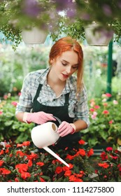 Young beautiful florist in apron standing with watering can and water the flowers while working in greenhouse