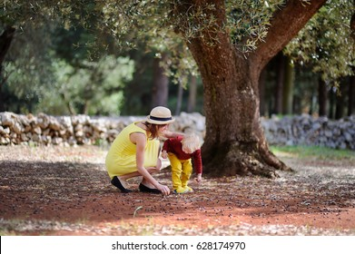 Young beautiful girl and little child picking olive. Happy female farmer and her little helper working in olive grove in Italy.