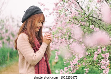 A young beautiful girl in peaches blossom garden when springtime in Hanoi, Vietnam is coming