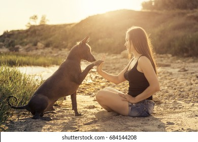 Young beautiful girl playing with a dog, giving paw, on a sandy beach at sunset