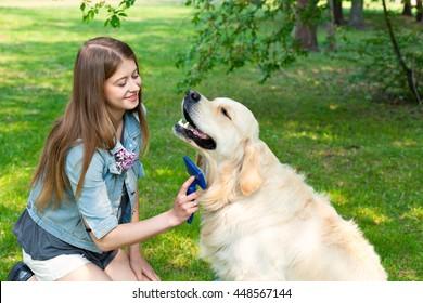 Young beautiful woman combing fur golden retriever dog on a green lawn.