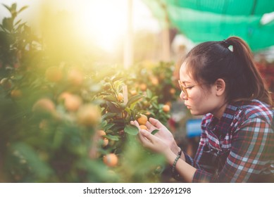 Young beautiful Woman pick orange from the garden .