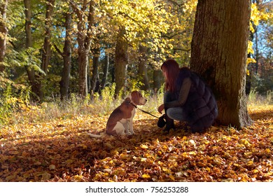 Young beautiful woman walking with a beagle in the park. Autumn sunny day.