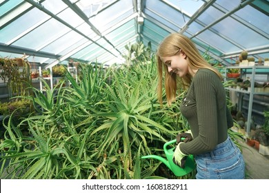 Young beautiful woman watering plants - aloe vera in greenhouse. cute girl holding watering can. female working under glasses roof of orangery