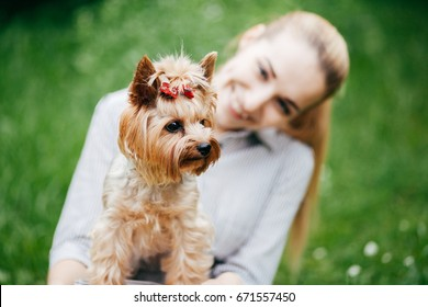 Young beautiful woman with yorkshire terrier against green of summer park