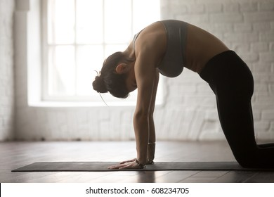 Young beautiful yogi woman practicing yoga concept, standing in asana paired with Cow Pose on the inhale exercise, Cat, Marjaryasana pose, working out wearing sportswear, white loft studio background
