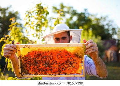 Young beekeeper inspect honey hive frame filled with honey. There is a many bees on it.