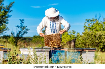 Young beekeeper working in the apiary. Beekeeping concept. Beekeeper harvesting honey