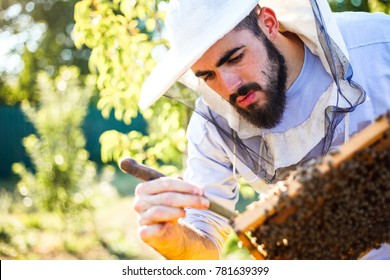 Young beekeeper works with bees in the garden. Wearing protective equipment with knife tool in hand and have a careful looks.
