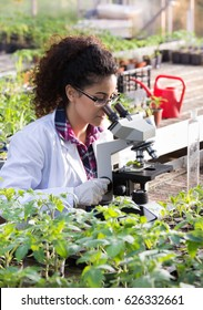 Young biologist looking at microscope with seedlings around her in greenhouse. Microbiology, biotechnology and bioengineering concept