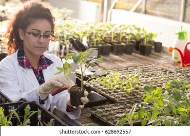 Young biologist pouring liquid chemicals in flower pot with sprout in greenhouse. Plant protection and biotechnology concept