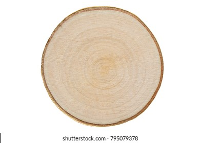 Young birch wood, cross section on white