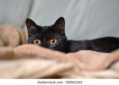 young black cat with gold eyes peeking over blanket