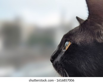Young black cat looking out of a window