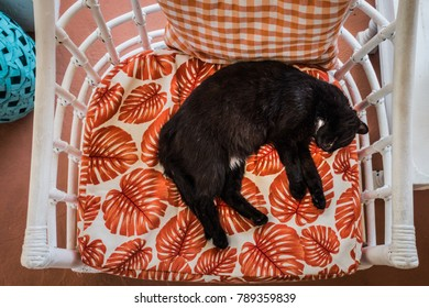 Young Black Cat Sleeping on a Chair on hot Summer Day of Caribbean
