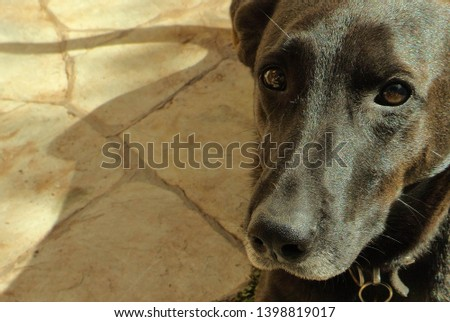young-black-female-dog-looking-450w-1398