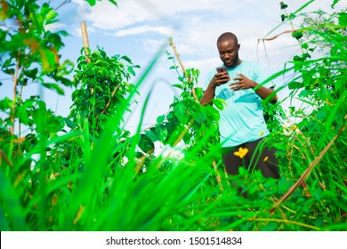 young black man pressing his phone in the farm