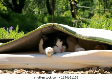 A young, black and white cat lies under the mattress. I am looking for shelter from the heat on a hot summer day.