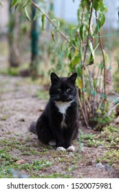Young black and white cat walking and hunting in the garden