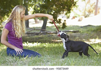 Young black and white Pit Bull puppy playing with blonde female adult