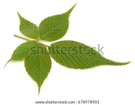 Best pics of young leaf picture 436
