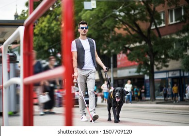Young blind man with white cane and guide dog walking on pavement in city.