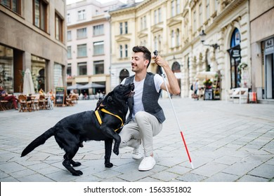 Young blind man with white cane and guide dog on pedestrain zone in city.