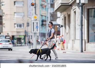 Young blind man with white cane and guide dog walking across street in city.