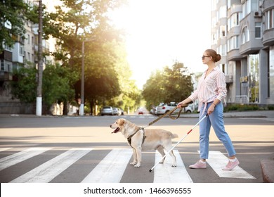 Young blind woman with guide dog crossing road