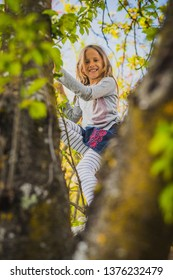 Young blonde caucasian girl climbing on a tree in beautiful sunny weather. Playful kid climbing to the top of  the tree. Girl hiding between leaves on a tree.
