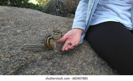Young blonde feeding a chipmunk in the national natural reserve