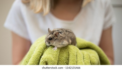 A  young blonde girl holding an adorable hamster with a bright green towel.