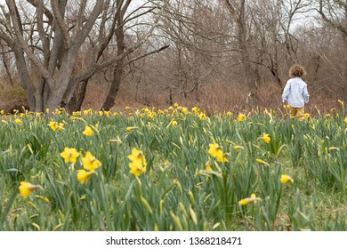 A young boy with blonde curly hair is in a field of yellow flowers. He is walking in yellow daffodils with yellow pants and rain boots in the springtime. The child playing outside in spring. Happy kid