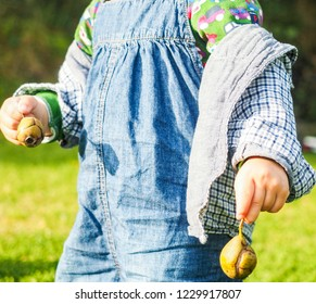 Young boy carrying two pear fruits, one in each hand, wearing jeans overall outdoors midday at summer, anonymous
