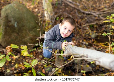 Young boy climbs in the woods to the wood.