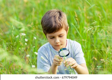 Young boy exploring nature in the meadow with a magnifying glass looking at flowers. Curious children in the woods, a future botanist.