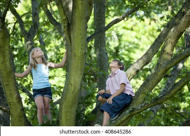 A young boy and girl climbing a tree, looking up