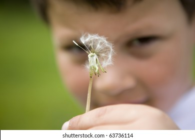 Young boy holding a dandelion