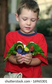 young boy holding two colorful birds in his hands and feeding them from a cup