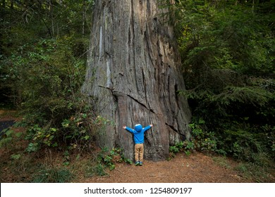 Young boy hugging a large tree along the Lady Bird Johnson Grove Trail in the California Redwoods National Park in coastal Northwest California.