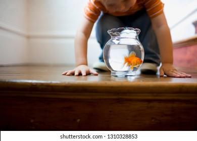 Young boy looking at a goldfish bowl