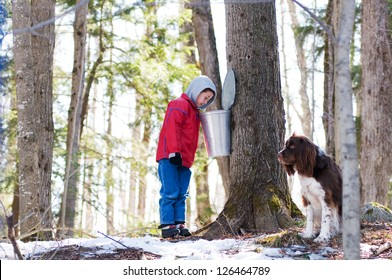 young boy looking in a maple sap bucket