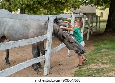 Junge Junge, der zwei Pferde auf dem Land streichelt