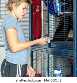 Young boy placing his pet rat back into the cage
