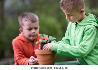 Young boy is planting a seedling of strawberry in a terracotta pot, to grow on balcony. Home grown fruit and vegetables, biodynamic farming, organic horticulture concept photo, pesticide free